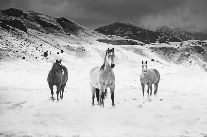 I Chase Wild Horses In North America To Photograph Their Beauty