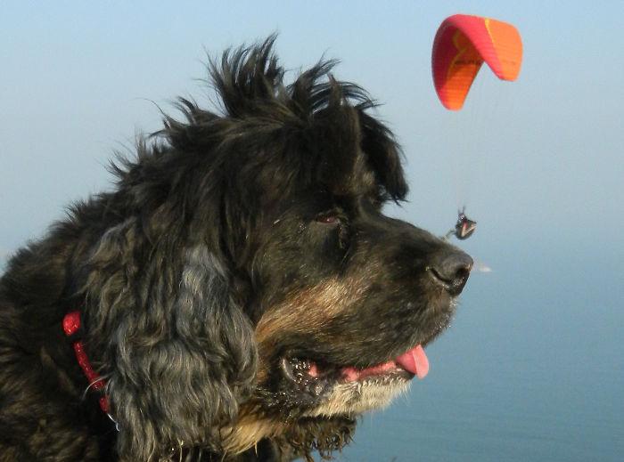 Paraglider Landing On My Dog's Nose