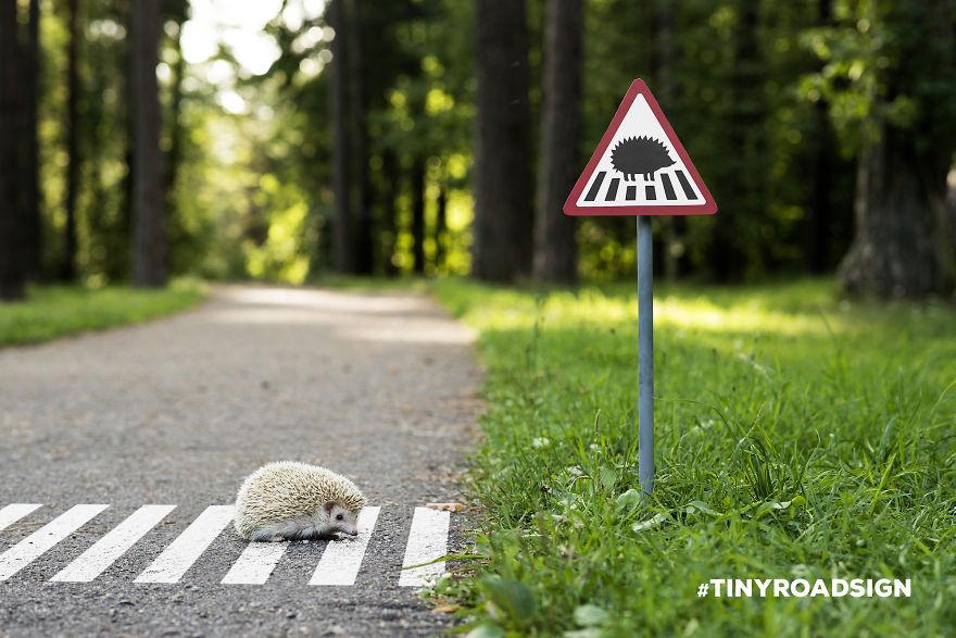 微小路标_立陶宛_保护小动物