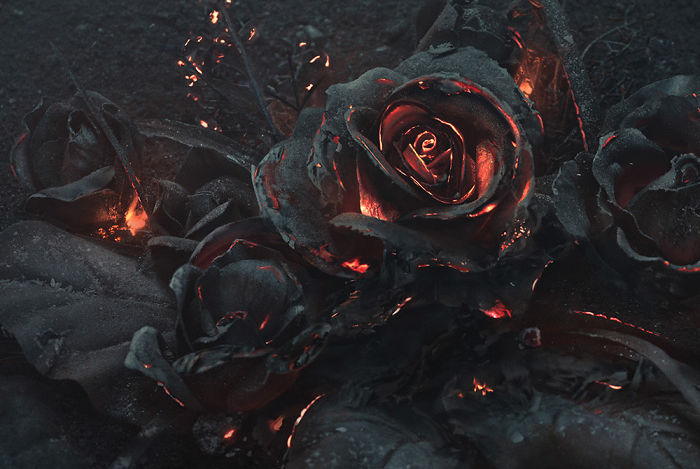 We Created A Bouquet Of Burning Roses