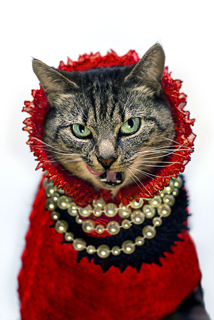 Meet Hummus, The Leukemic Fashion Cat Icon!