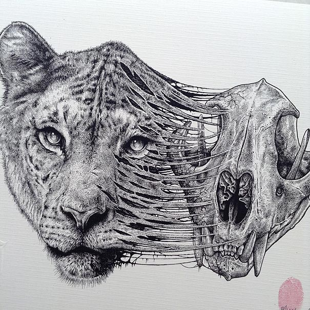 Detailed Line Drawings Of Animals : Animals leave their skeletons behind in stunning dark