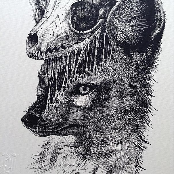 Animal skull drawings paul jackson 6