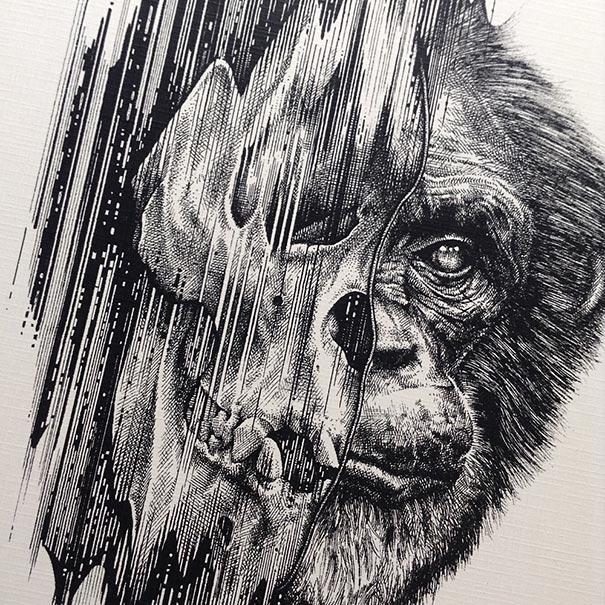 animal-skull-drawings-paul-jackson-8