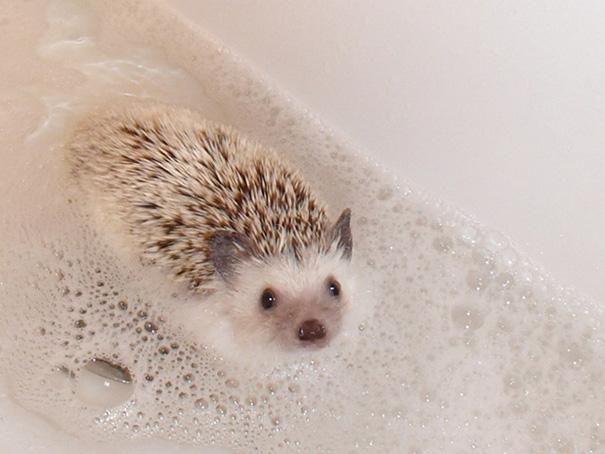 Lila Likes A Good Bubble Bath Just Like Anybody Else
