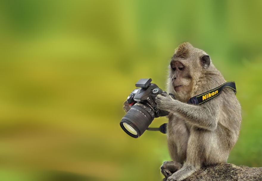 Monkey With Camera