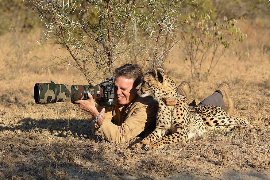 Cheetah With Camera