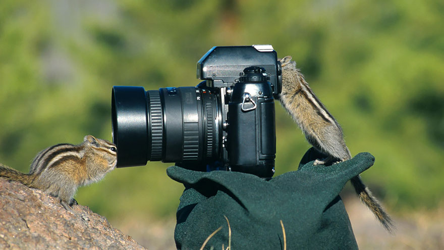 Chipmunk With Camera