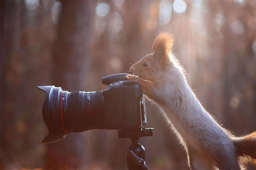 Squirrel With Camera