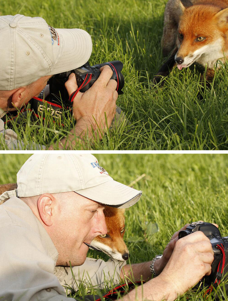 Fox And A Photographer