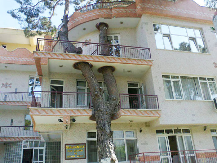 architecture-around-the-trees-1__700.jpg