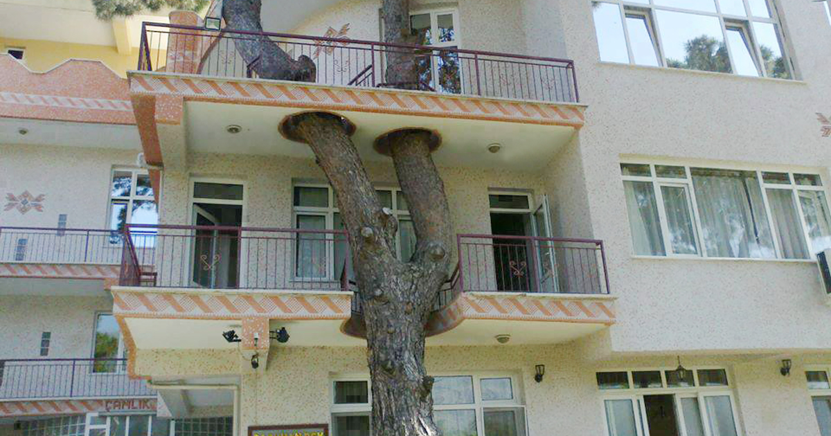 34 Clever Buildings Whose Architects Refused To Cut Down Local Trees
