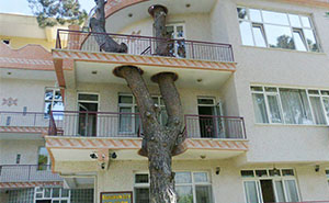 11+ Clever Buildings Whose Architects Refused To Cut Down Local Trees