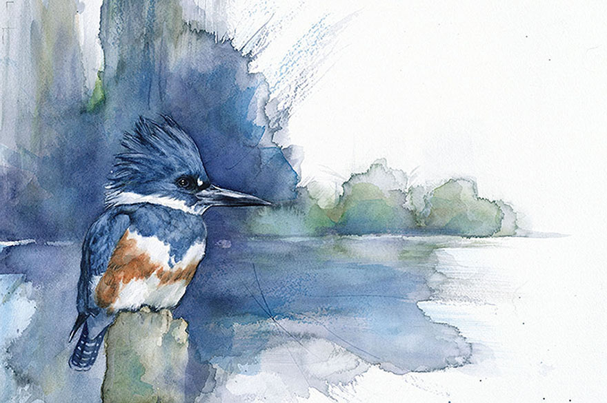 bird-watercolor-paintings-anne-balogh-6