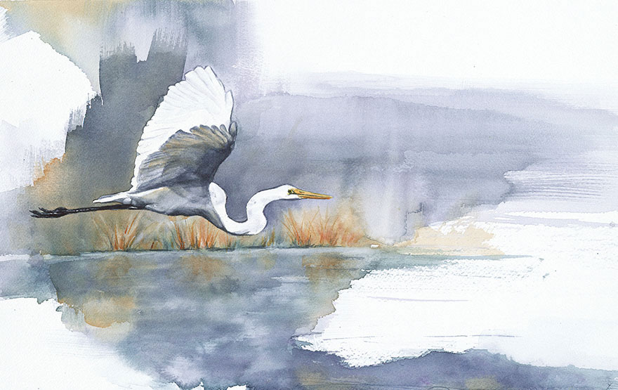 bird-watercolor-paintings-anne-balogh-7