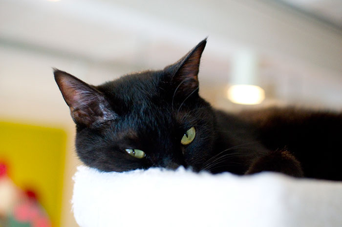 I Visited The World's Only Black-Cat Cafe