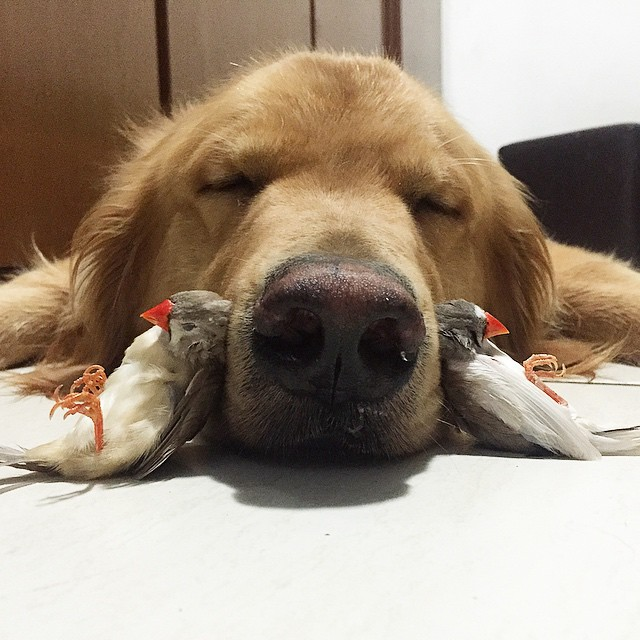 A Dog 8 Birds And A Hamster Are The Most Unusual Best