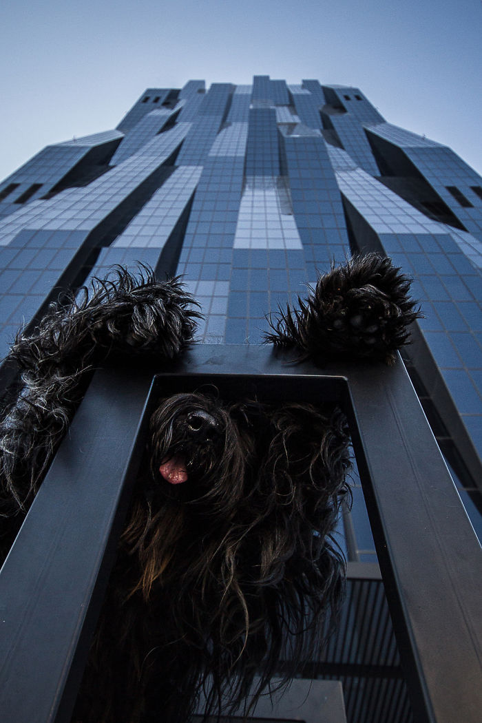Godzilla? My Dog Elliot In Front Of Austria's Highest Skyscraper, Dc Tower (220m)
