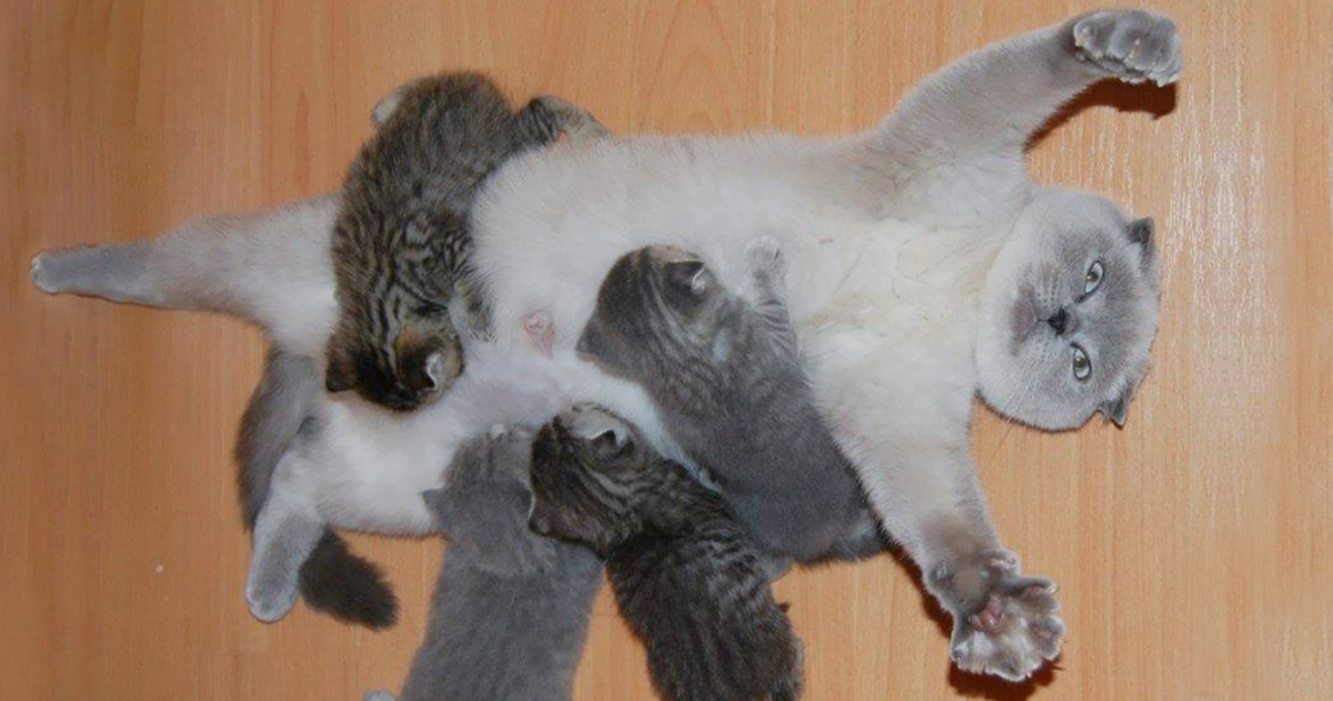 This Cat\'s Face Perfectly Shows How It Feels To Be A New Mother ...