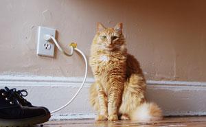 25+ Cats' Deepest Secrets Revealed On Felines Of New York