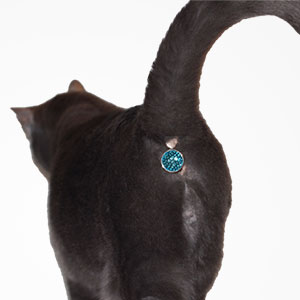 This Ass-cessory Turns Your Cat's Butt Into A Glittering Jewel