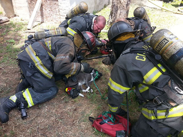 cat-revived-oxygen-mask-fire-department-12
