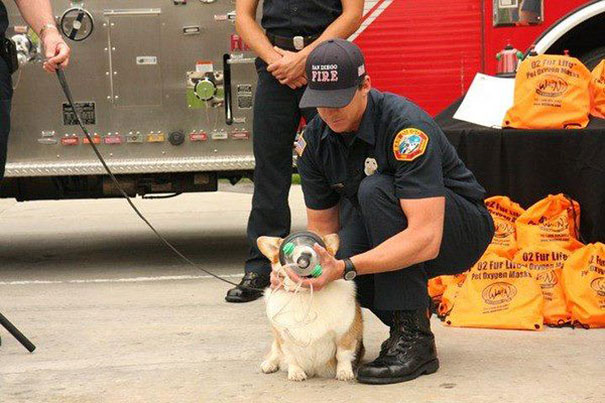 cat-revived-oxygen-mask-fire-department-7