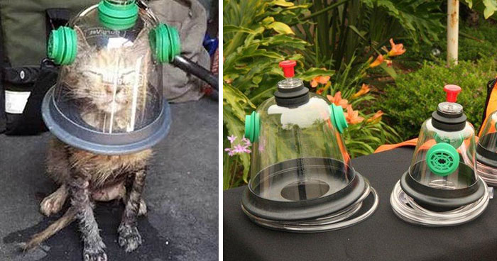 Firemen Revive Unconscious Cat Using Special Pet Oxygen Mask