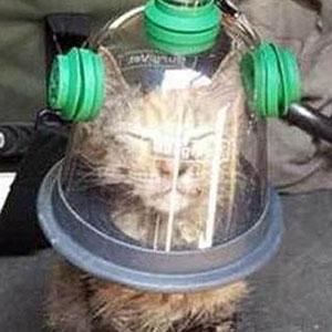 Firemen Revive Unconscious Cat Using Special Pet Oxygen Mask