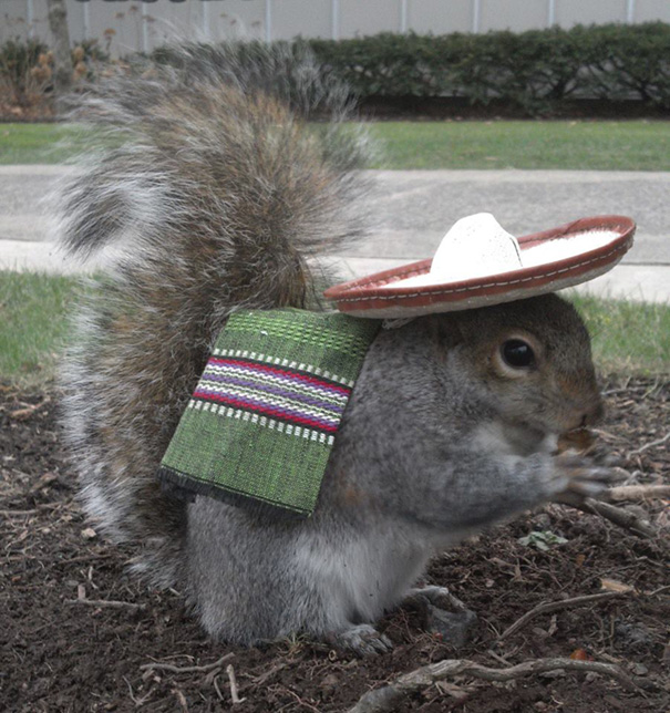 costume-squirrel-whisperer-sneezy-nary-krupa-2