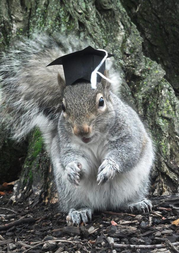 costume-squirrel-whisperer-sneezy-nary-krupa-27