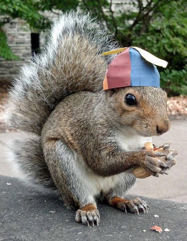 costume-squirrel-whisperer-sneezy-nary-krupa-37