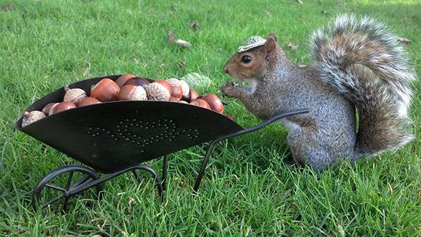 costume-squirrel-whisperer-sneezy-nary-krupa-42