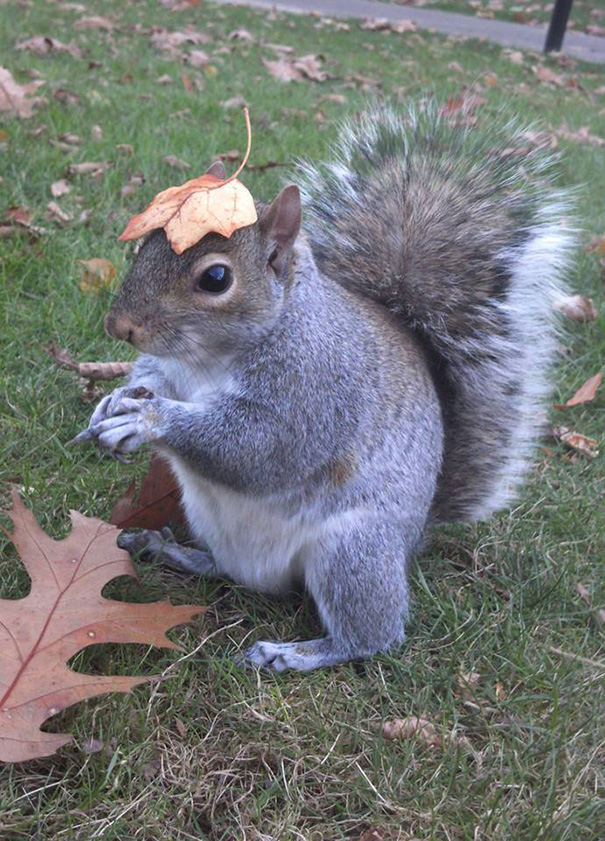 costume-squirrel-whisperer-sneezy-nary-krupa-43 & Student Befriends Squirrels On Campus And Dresses Them In Cute ...