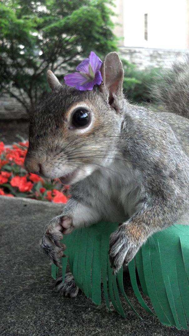 costume-squirrel-whisperer-sneezy-nary-krupa-56