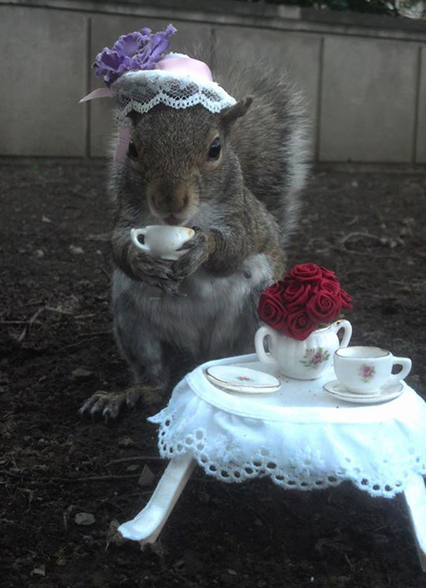 Student Befriends Squirrels On Campus And Dresses Them In Cute - Student befriends campus squirrels then dresses them in the cutest outfits ever