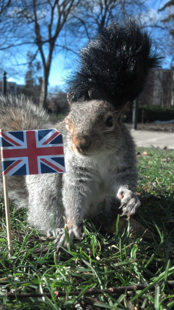 costume-squirrel-whisperer-sneezy-nary-krupa-9