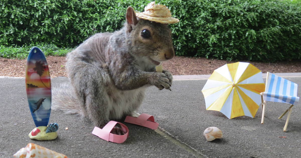 Student Befriends Squirrels On C&us And Dresses Them In Cute Costumes | Bored Panda & Student Befriends Squirrels On Campus And Dresses Them In Cute ...