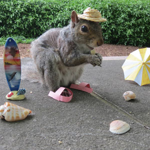 Student Befriends Squirrels On Campus And Dresses Them In Cute Costumes