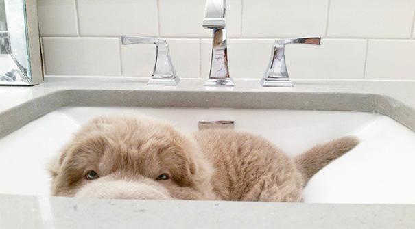cute-bear-lookalike-dog-tonkey-4