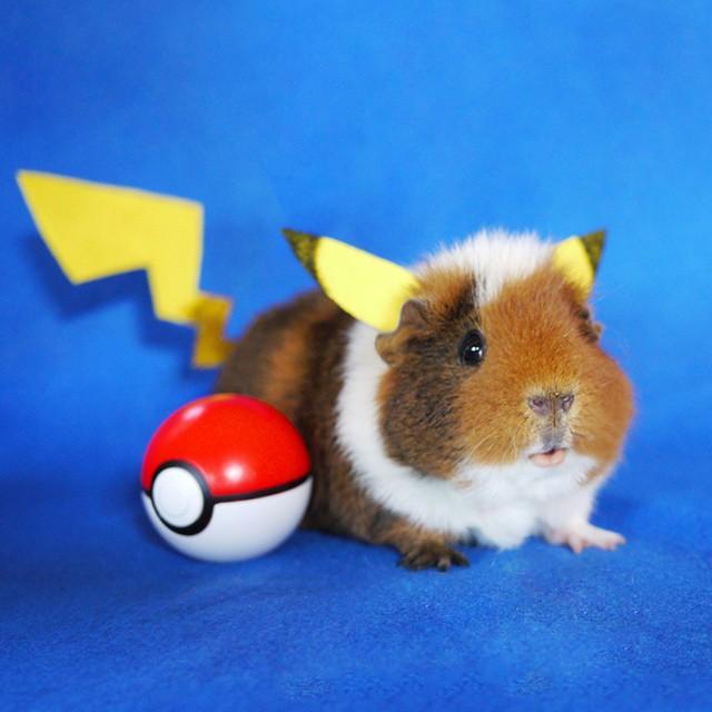 cute-hamster-costumes-fuzzberta-instagram-1
