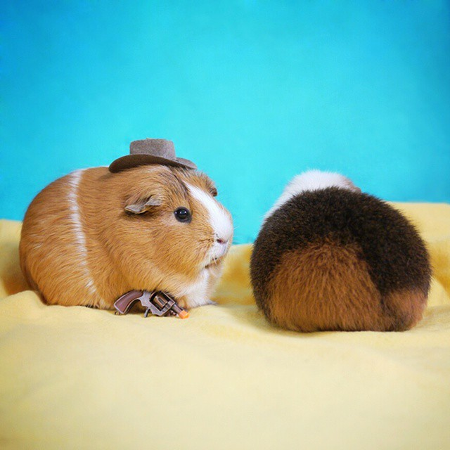 cute-hamster-costumes-fuzzberta-instagram-11