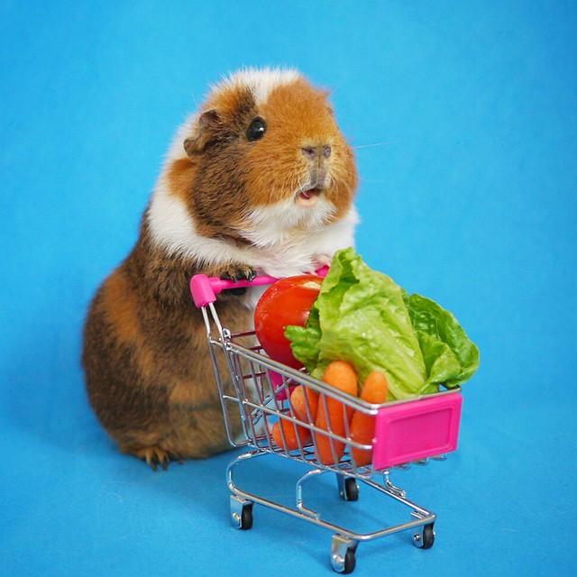 cute-hamster-costumes-fuzzberta-instagram-13