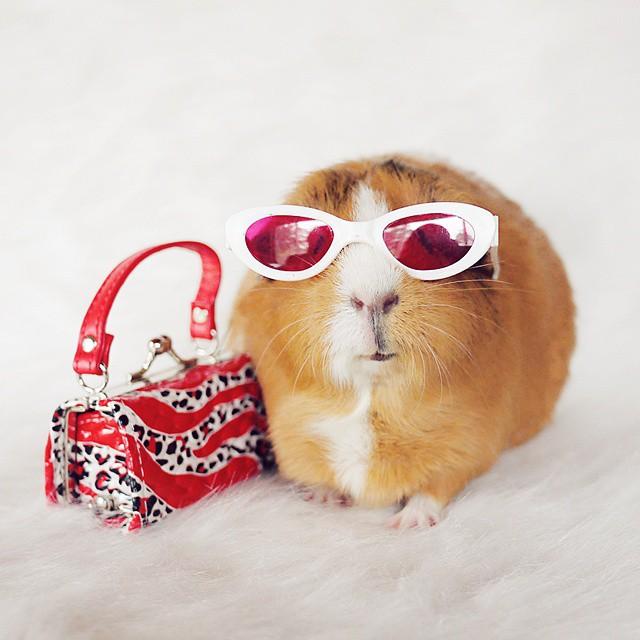 cute-hamster-costumes-fuzzberta-instagram-19