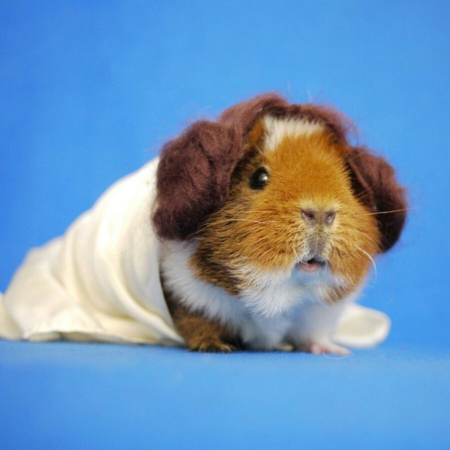 cute-hamster-costumes-fuzzberta-instagram-4
