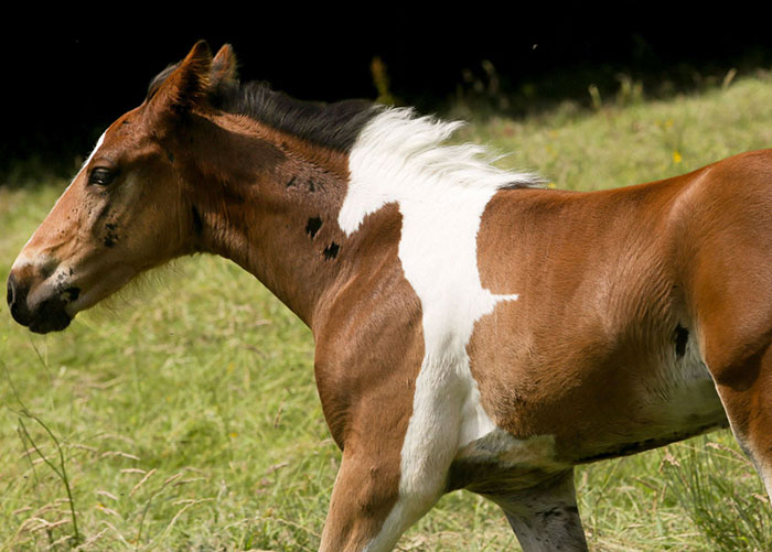 Baby Horse Born With Horse-Shaped Marking