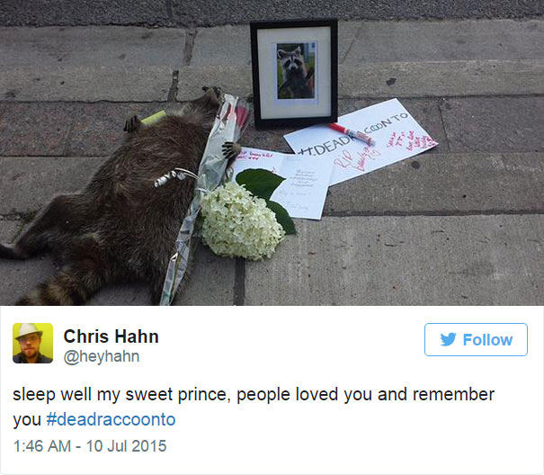 dead-raccoon-memorial-shrine-mourning-deadraccoonto-toronto-5