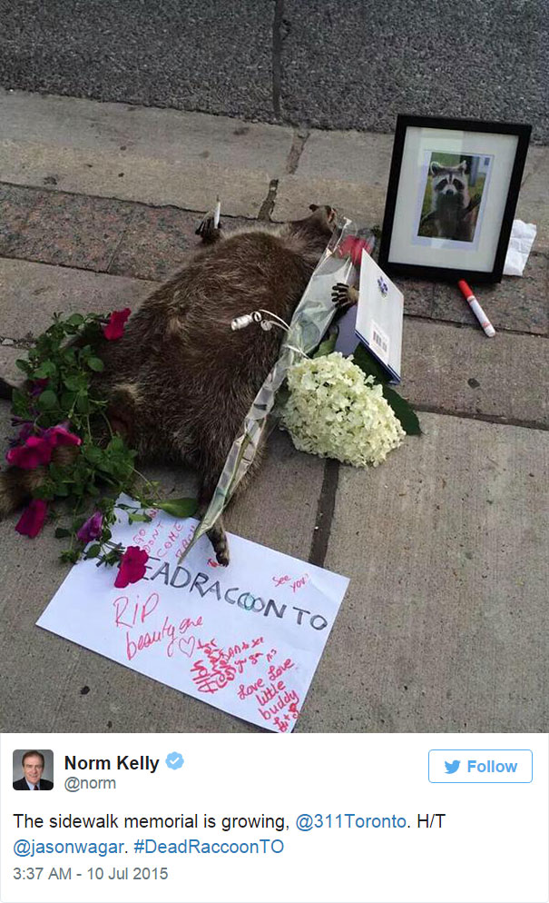 dead-raccoon-memorial-shrine-mourning-deadraccoonto-toronto-8