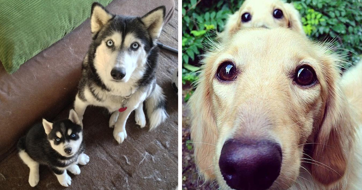 16+ Dogs With Their Cute Mini-Mes