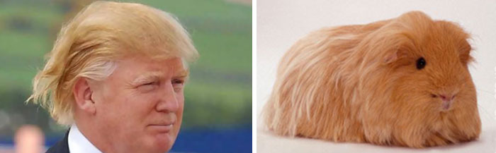 This Is What Donald Trump Looks Like